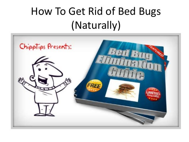 how do i kill bed bugs - 28 images - arab pest control evansville bed bugs, worst bed bug ...