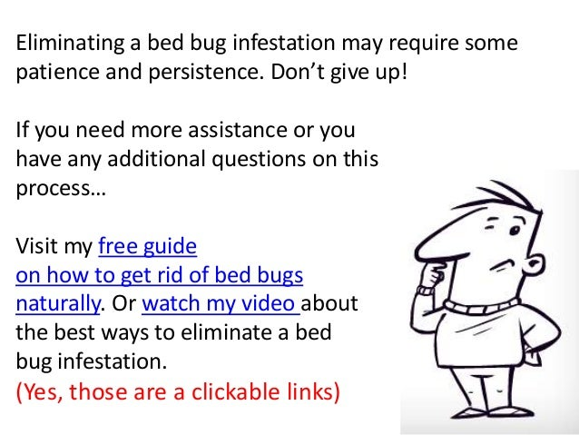 How To Get Rid Of Bed Bugs Naturally Learn How To Kill