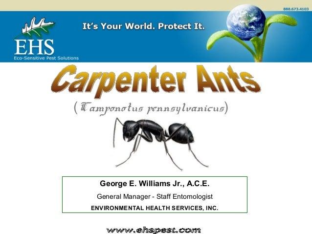 © (Camponotus pennsylvanicus) George E. Williams Jr., A.C.E. General Manager - Staff Entomologist ENVIRONMENTAL HEALTH SER...