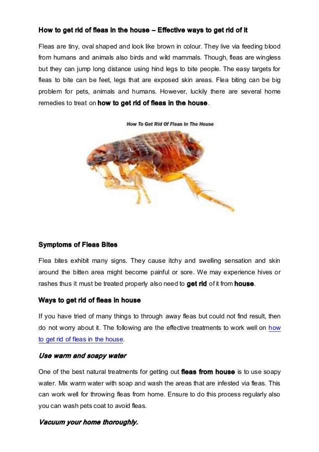 How To Get Rid Of Fleas In The House U2013 Effective Ways To Get Rid Of ...