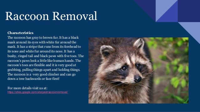 How To Get Rid Of Raccoons In Backyard