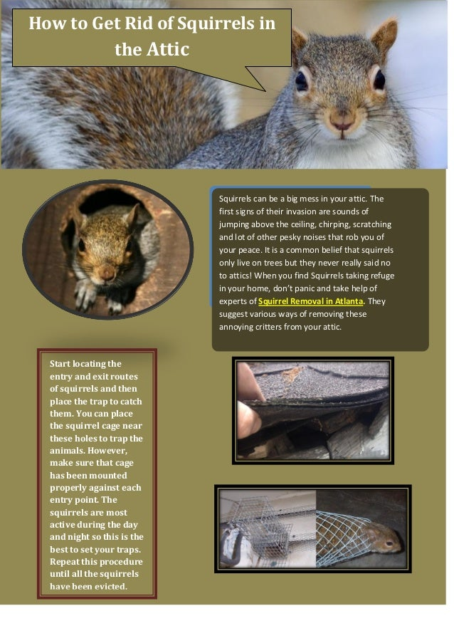 How To Get Rid Of Squirrels In The Attic