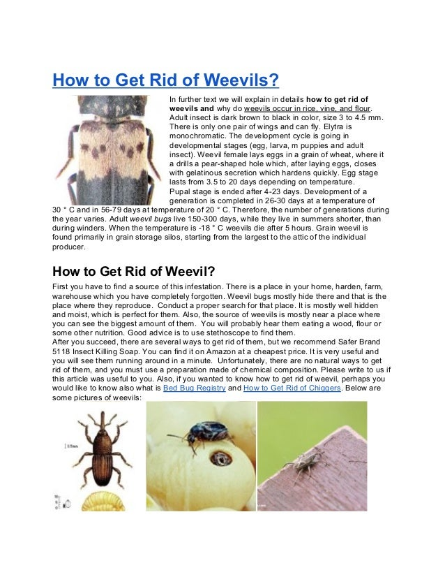 How to Get Rid of Weevils?In further text we will explain in details how to get rid ofweevils and why do weevils occur in ...