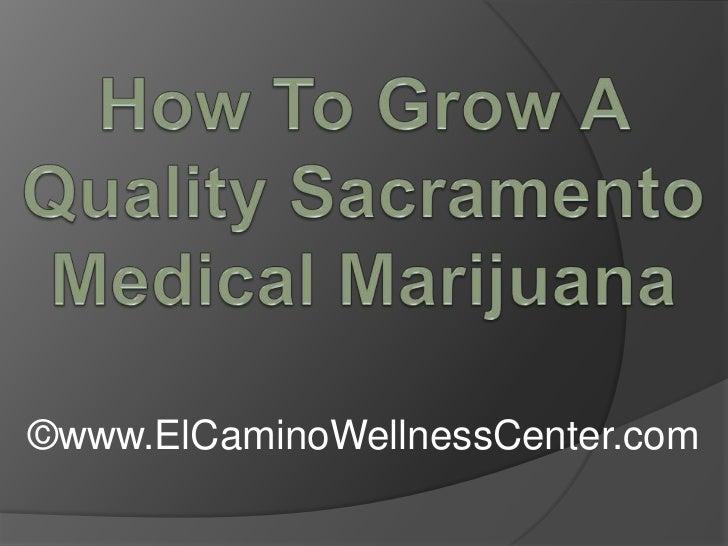How To Grow A Quality Sacramento Medical Marijuana<br />©www.ElCaminoWellnessCenter.com<br />