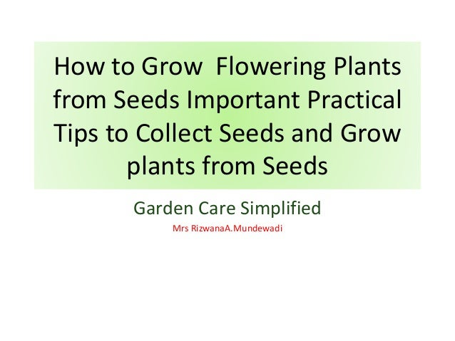 How to grow flowering plants from seeds important tips - Practical tips to make money from gardening ...