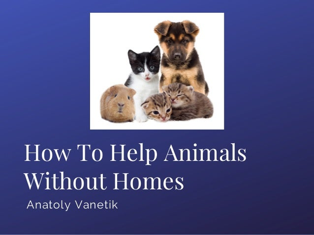 How To Help Animals Without Homes Anatoly Vanetik