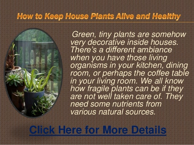 Green, tiny plants are somehowvery decorative inside houses.There's a different ambiancewhen you have those livingorganism...