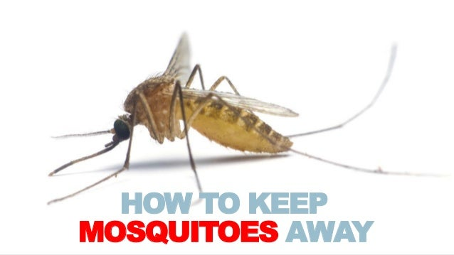 How To Keep Mosquitoes Away
