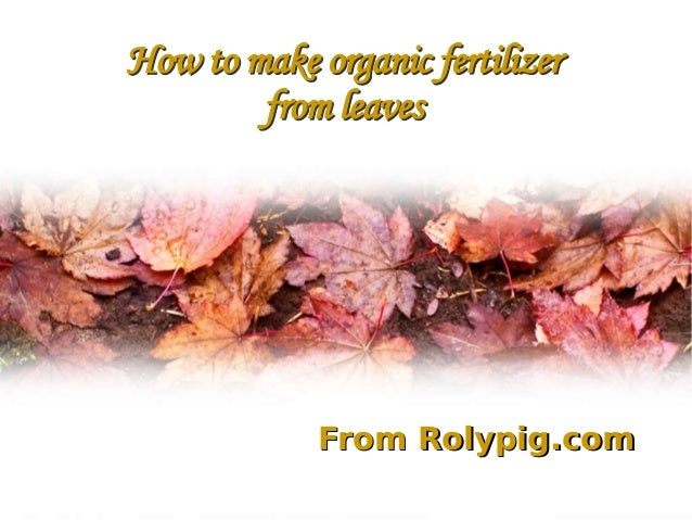 How to make organic fertilizer from leaves How to make organic fertilizer from leaves From Rolypig.comFrom Rolypig.com