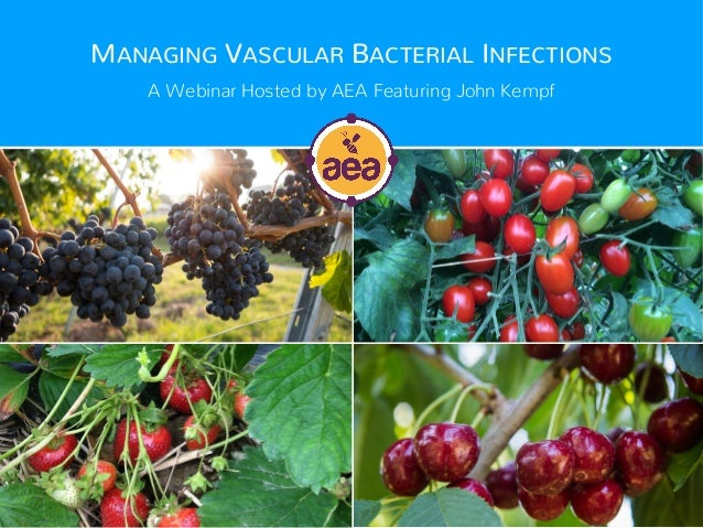 MANAGING VASCULAR BACTERIAL INFECTIONS A Webinar Hosted by AEA Featuring John Kempf