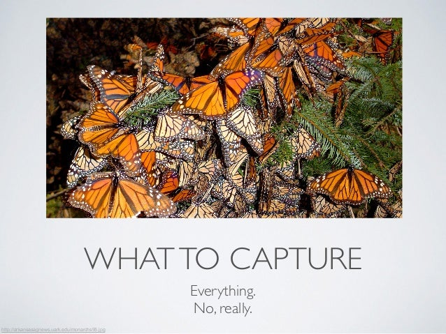 WHAT TO CAPTURE  Everything.  No, really.  http://arkansasagnews.uark.edu/monarchs95.jpg