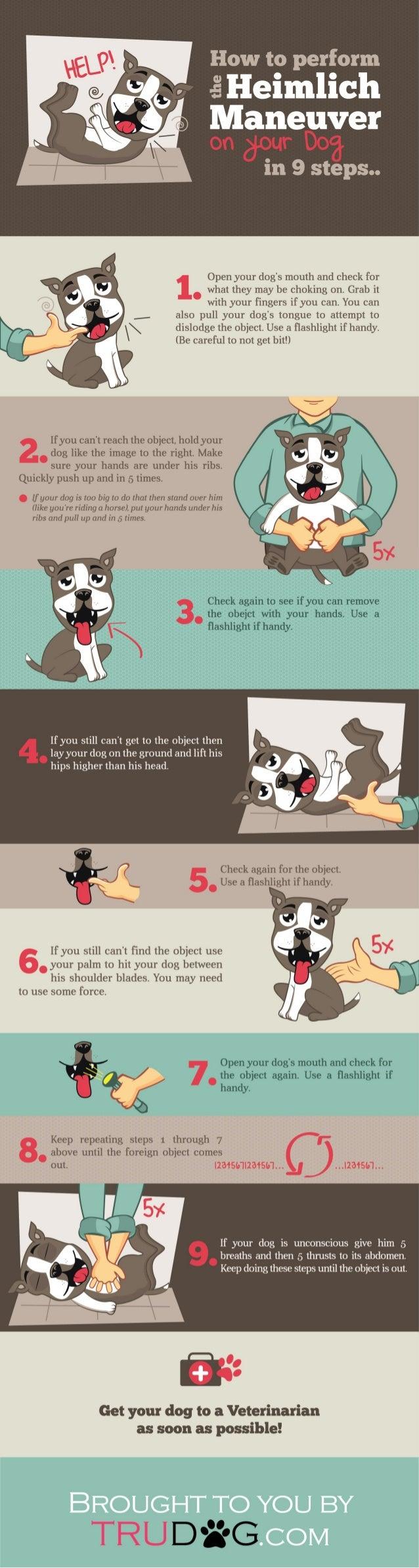 Can You Heimlich A Dog