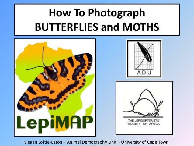 How To Photograph BUTTERFLIES and MOTHS  Megan Loftie-Eaton – Animal Demography Unit – University of Cape Town