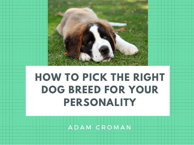 HOW TO PICK THE RIGHT DOG BREED FOR YOUR PERSONALITY A D A M C R O M A N