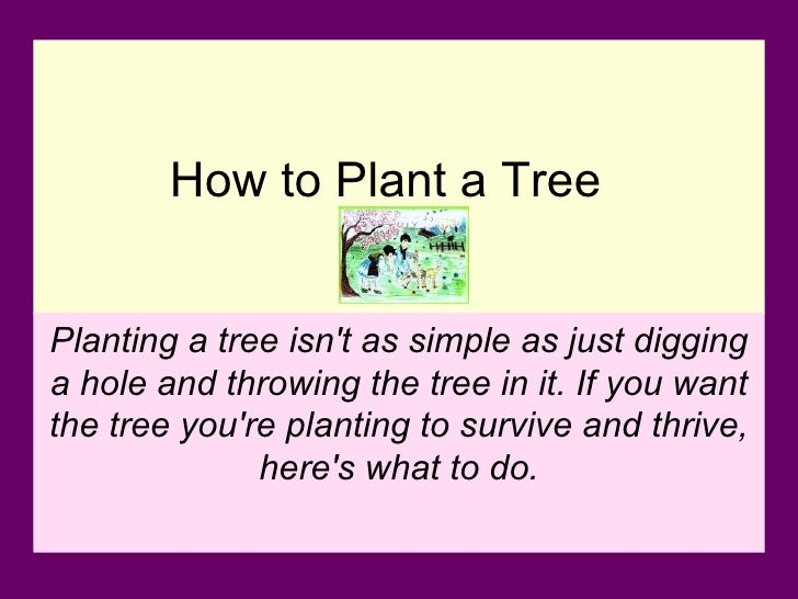 How to Plant a Tree   Planting a tree isn't as simple as just digging a hole and throwing the tree in it. If you want the ...