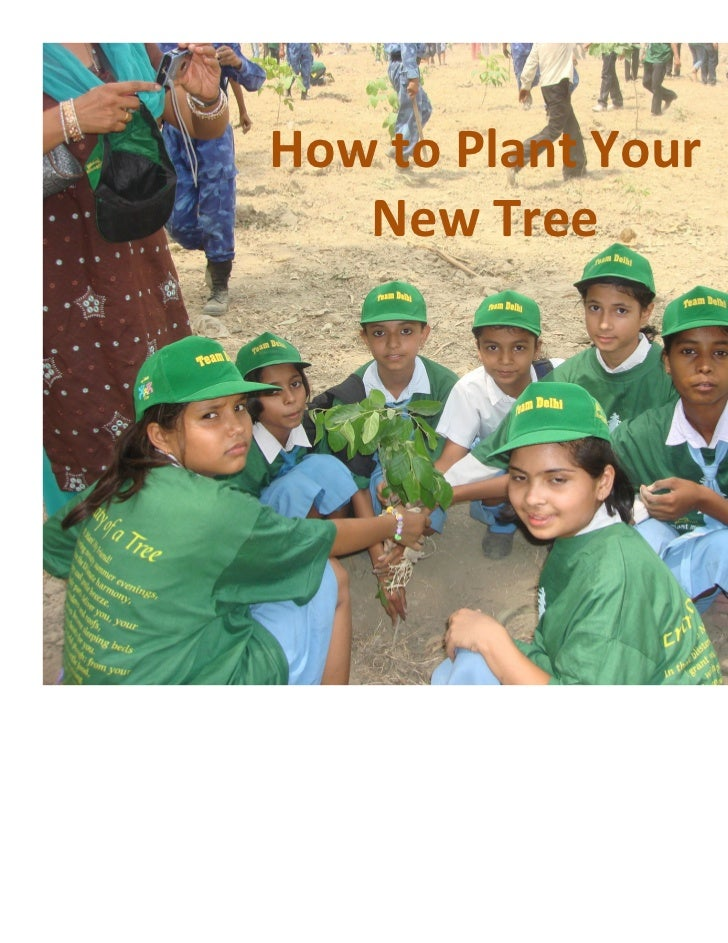 How to Plant Your   New Tree