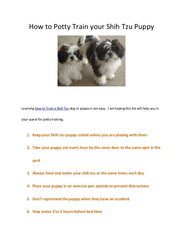 how to potty train a dog Do you have any suggestions or tips i could use or make my parents use to try and potty train him with our busy potty training dogs: how to do it dog training.