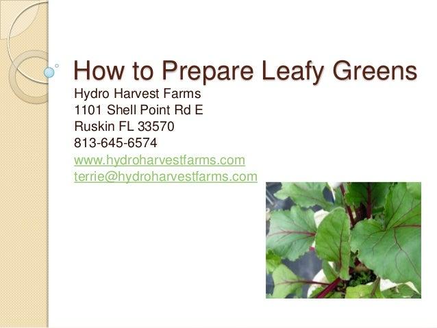 How to Prepare Leafy Greens Hydro Harvest Farms 1101 Shell Point Rd E Ruskin FL 33570 813-645-6574 www.hydroharvestfarms.c...