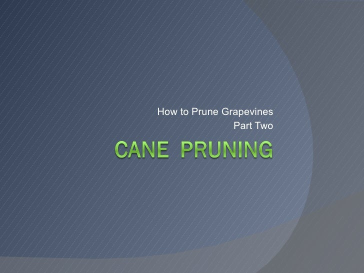 How to Prune Grapevines Part Two