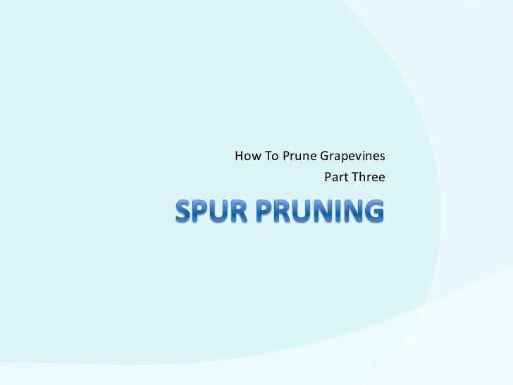 How To Prune Grapevines Part Three