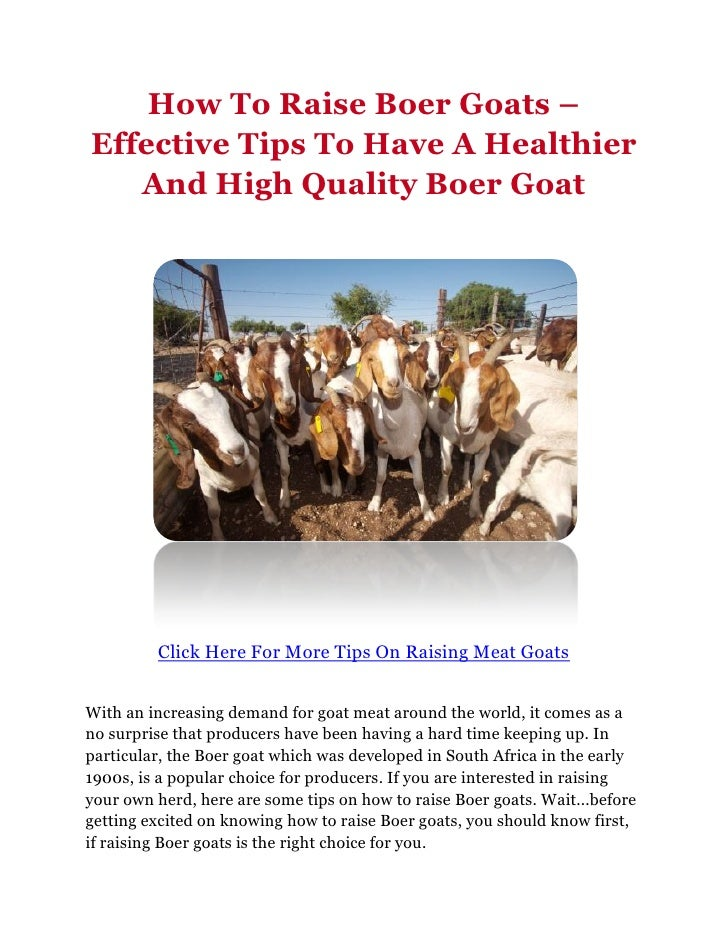 How To Raise Boer Goats –Effective Tips To Have A Healthier   And High Quality Boer Goat         Click Here For More Tips ...
