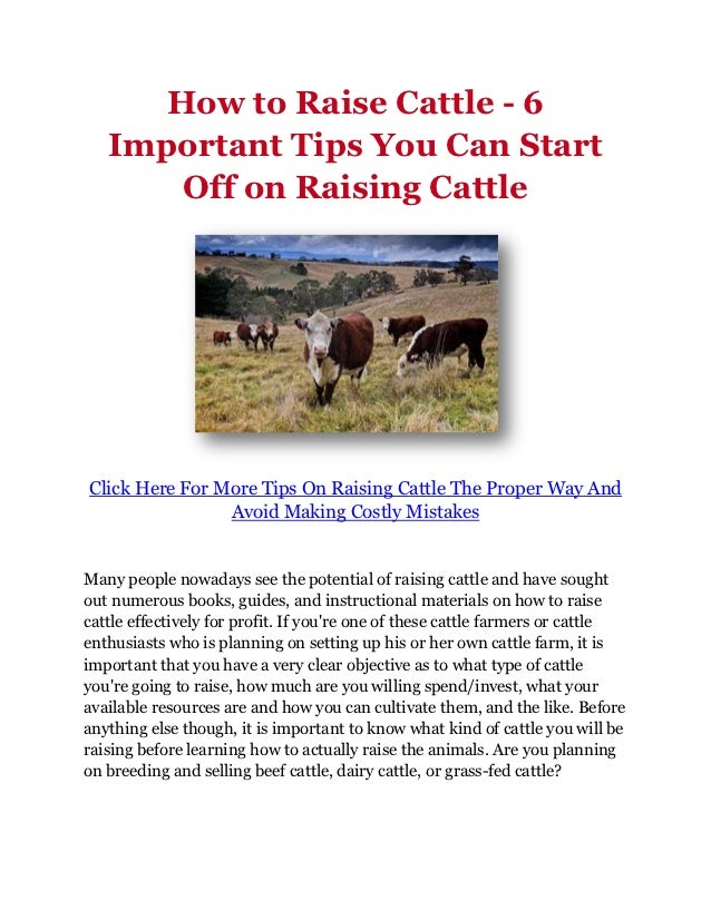 How to Raise Cattle - 6   Important Tips You Can Start       Off on Raising CattleClick Here For More Tips On Raising Catt...