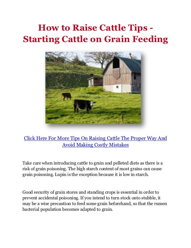 How to Raise Cattle Tips -Starting Cattle on Grain FeedingClick Here For More Tips On Raising Cattle The Proper Way And   ...
