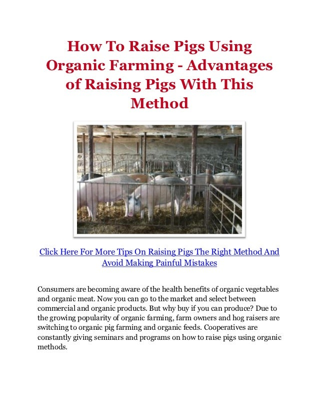 How To Raise Pigs Using  Organic Farming - Advantages    of Raising Pigs With This             MethodClick Here For More T...