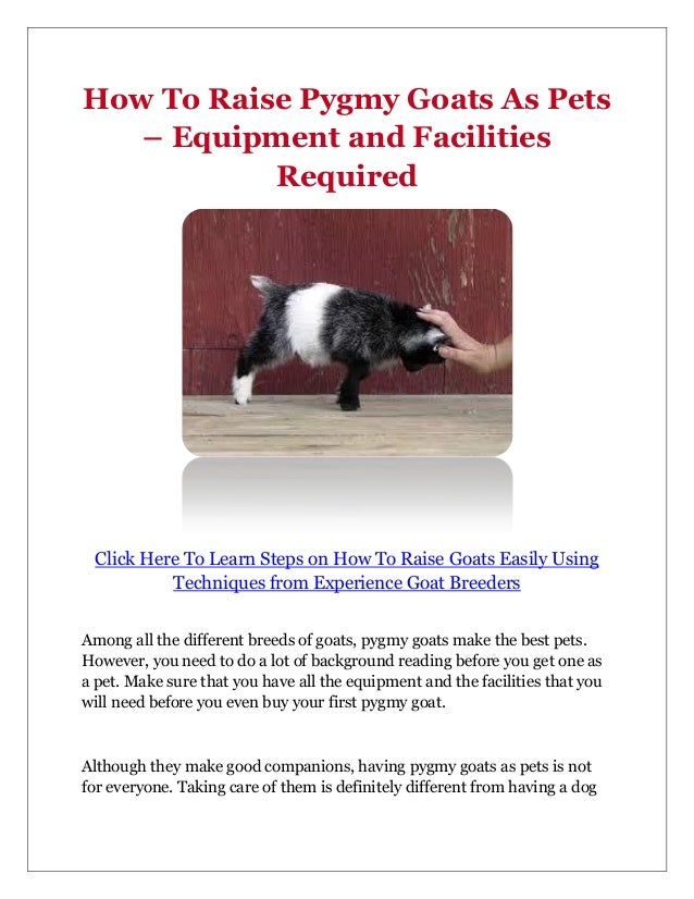 How To Raise Pygmy Goats As Pets – Equipment and Facilities