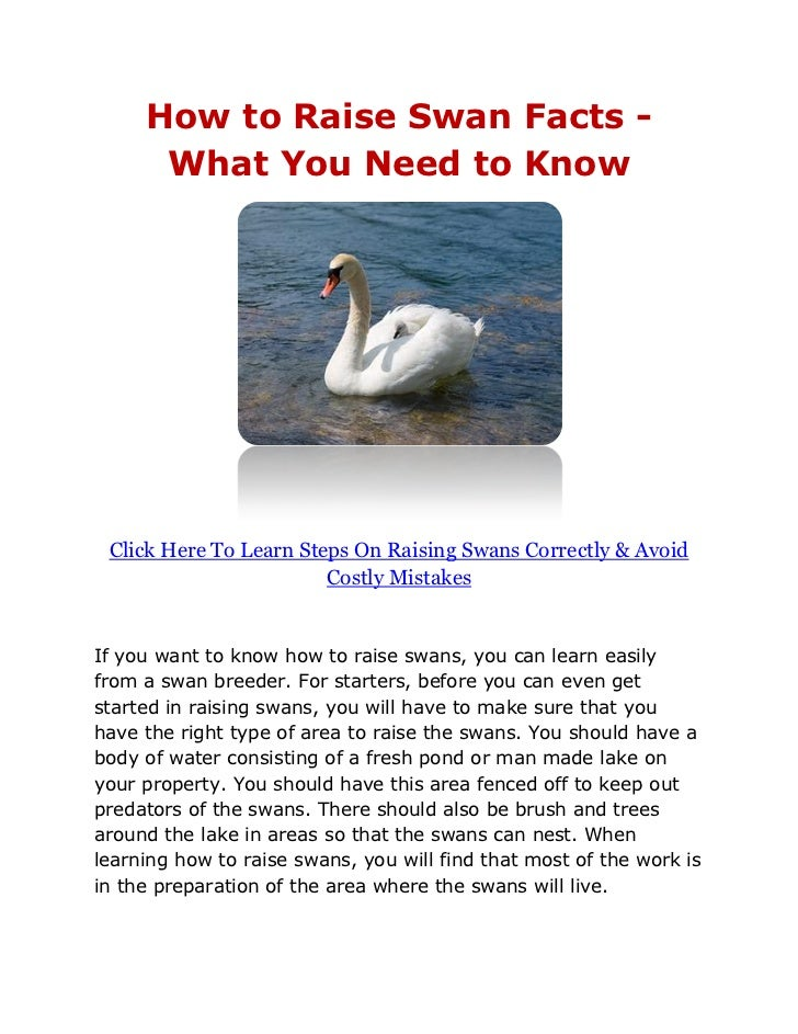 What You Need To Know About Home Saunas: How To Raise Swan Facts