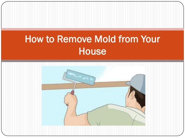 How To Remove Mold From 28 Images How To Remove Mold