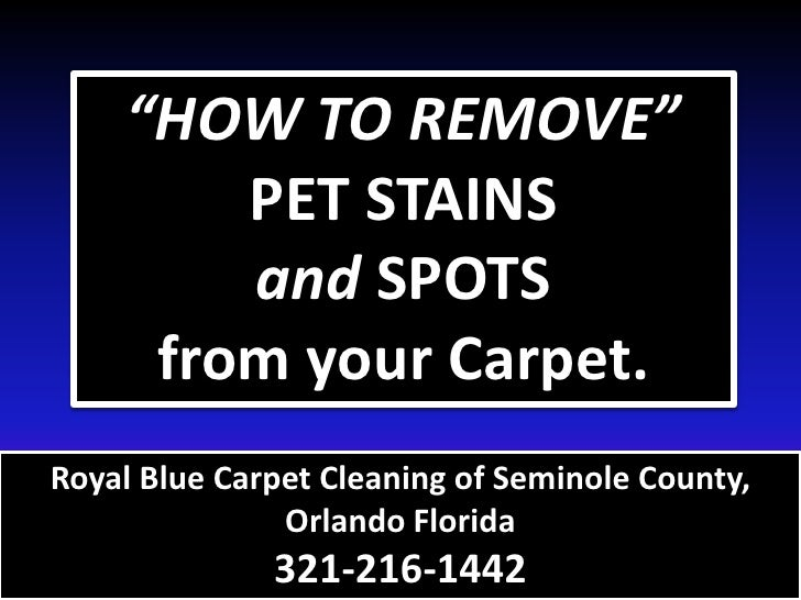 how to remove pet remove pet stain urine odor from carpet 321 216 144. Black Bedroom Furniture Sets. Home Design Ideas