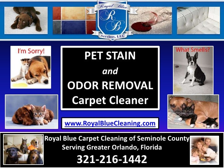 How To Remove Pet Stain Urine Odor From Carpet