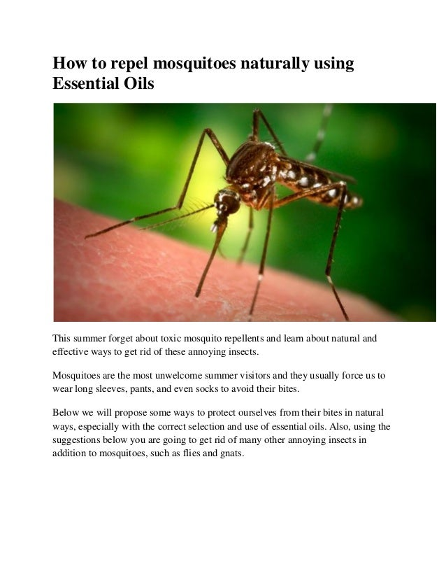 How To Repel Mosquitoes Naturally Using Essential Oils