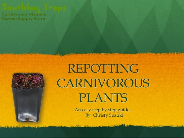 REPOTTING CARNIVOROUS PLANTS An easy step by step guide… By: Christy Suzuki