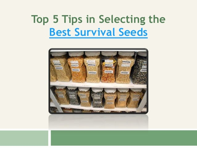 Top 5 Tips in Selecting the Best Survival Seeds