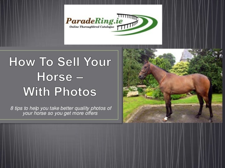 8 tips to help you take better quality photos of      your horse so you get more offers