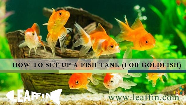 How to set up a fish tank for goldfish for How to set up fish tank
