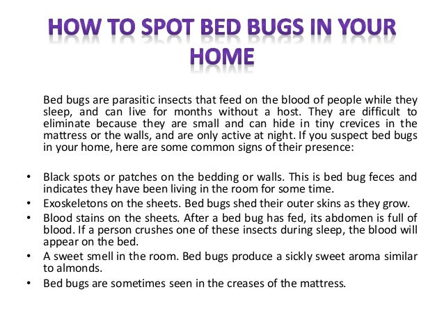 Bed bugs are parasitic insects that feed on the blood of people while they  sleep. How to Spot Bed Bugs in Your Home