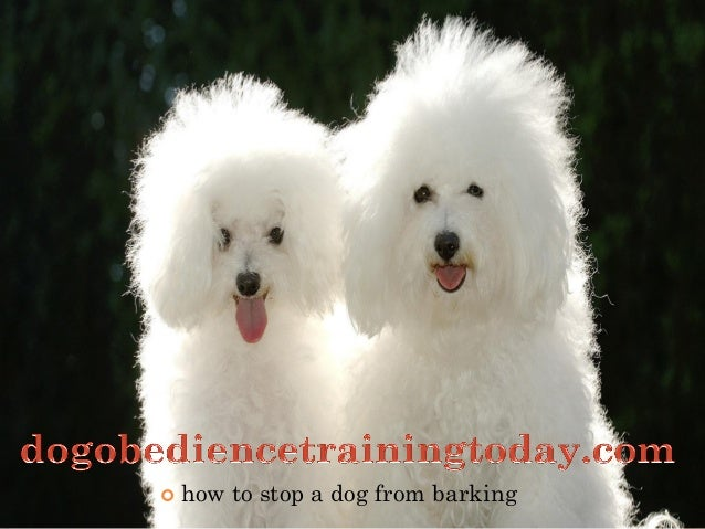    how to stop a dog from barking