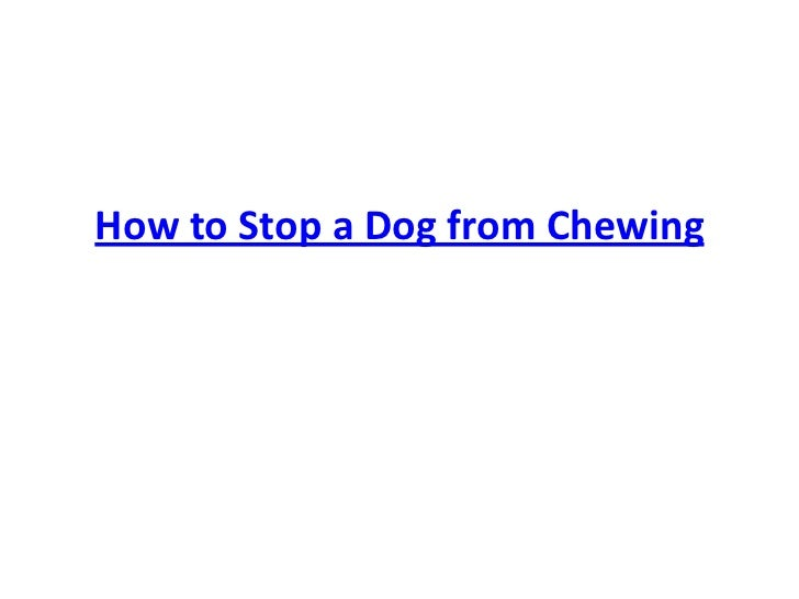 How to Stop a Dog from Chewing<br />