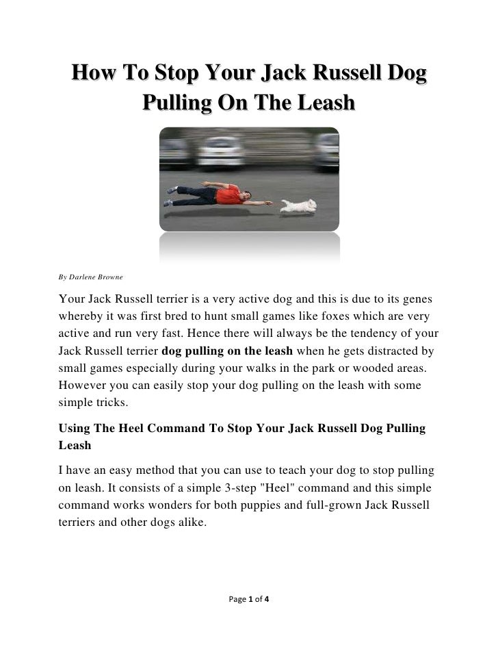 How To Stop Your Jack Russell Dog        Pulling On The LeashBy Darlene BrowneYour Jack Russell terrier is a very active d...