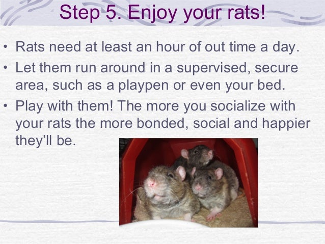 how to take care of a rat