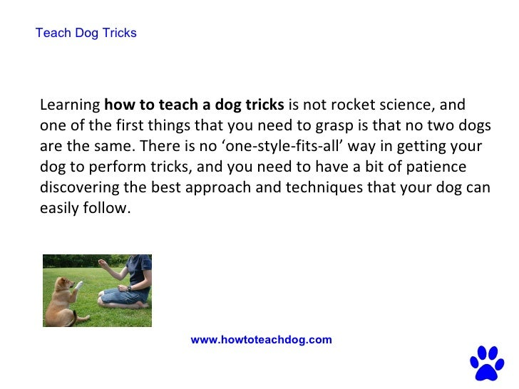 how to teach your dog tricks easy