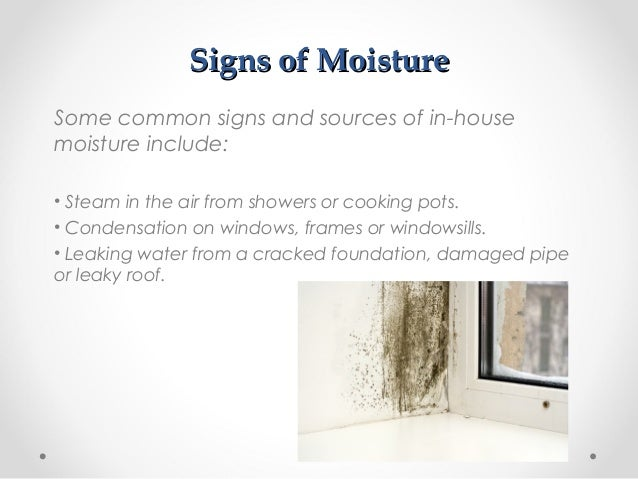 How To Tell If You Have A Mold Problem