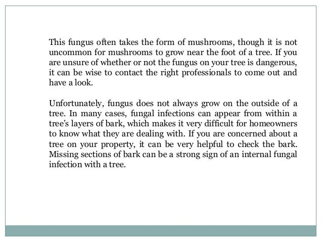 How to Tell Your Tree Needs Care - 웹
