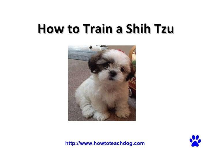 How to Train a Shih Tzu   http://www.howtoteachdog.com