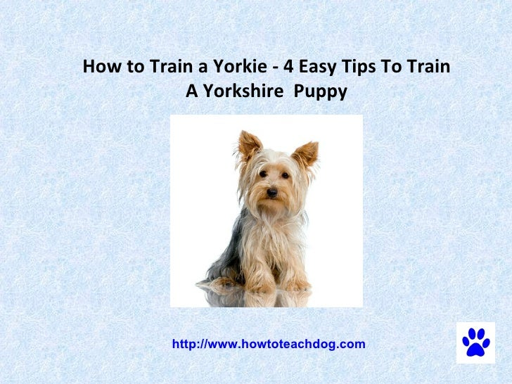 How to Train a Yorkie - 4 Easy Tips To Train A Yorkshire  Puppy   http://www.howtoteachdog.com
