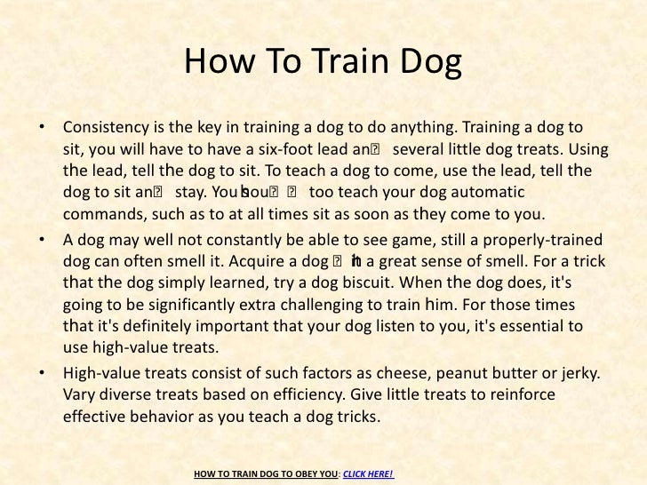 How To Train Your Dog To Obey Commands