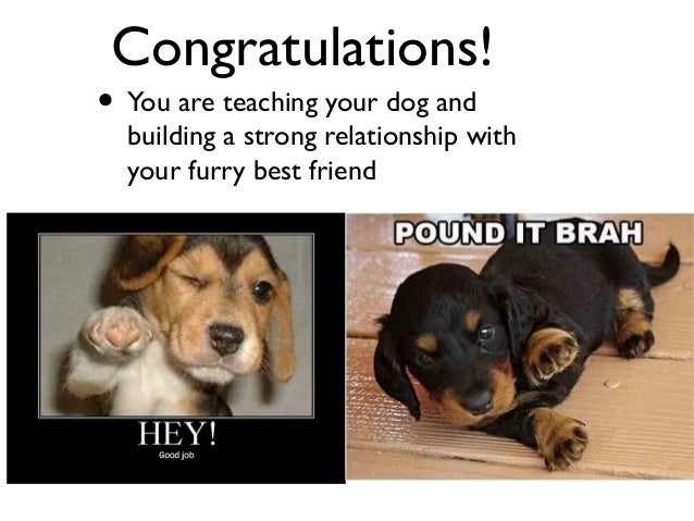 What Is The Best Dog To Train